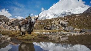 Traumziel-fuer-Trekkingbegeisterte_Nepal